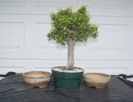 Plant Physiology: Indoor Trees