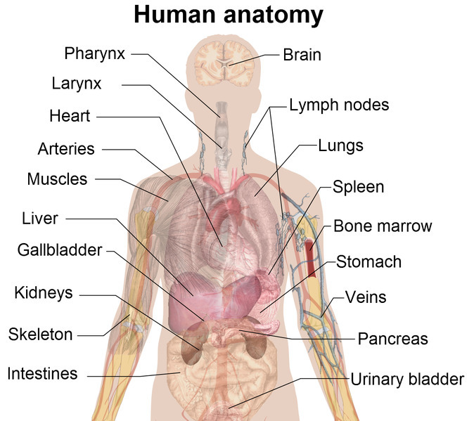 Physiology | Human body | How are Anatomy and Physiology Related